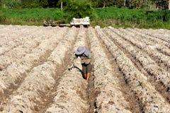 Farmer cassava planting. On farm  in Thailand Stock Photography