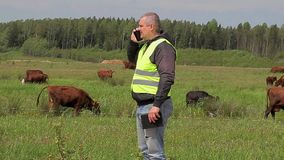 Farmer with cell phone near the cows at pasture stock footage