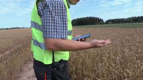 Farmer checking cereals on the field stock video footage