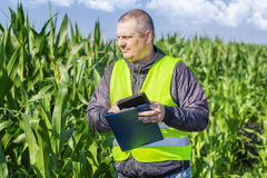 Farmer checking the corn field Royalty Free Stock Image