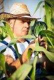 Farmer checking his cornfield Royalty Free Stock Photography