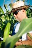 Farmer checking his cornfield Stock Photo