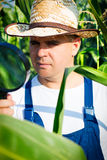 Farmer checking his cornfield Royalty Free Stock Image