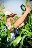Farmer checking his cornfield Royalty Free Stock Photo