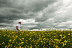 Farmer checking his crop of canola. Farmer in his canola field before the rain starts Royalty Free Stock Images