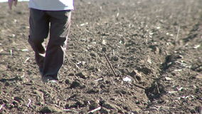 Farmer checking his crop stock video footage