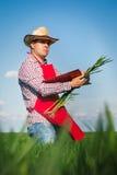Farmer checking his crops Royalty Free Stock Photo