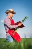Farmer checking his crops Stock Images