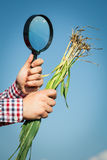 Farmer checking his crops Royalty Free Stock Image