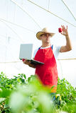 Farmer checking peppers plants In greenhouse Royalty Free Stock Photos
