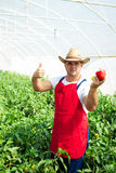 Farmer checking peppers plants In greenhouse Royalty Free Stock Photography