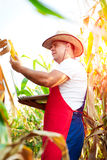 Farmer checking the quality of the corn crops Stock Photos