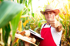 Farmer checking the quality of the corn crops Royalty Free Stock Image