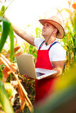 Farmer checking the quality of the corn crops Royalty Free Stock Photos