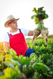 Farmer checking the quality of the sugar beets Stock Photography