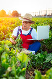 Farmer checking the quality of the sugar beets Royalty Free Stock Photos