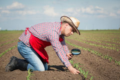 Farmer checks the corn Royalty Free Stock Photography