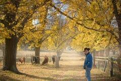 Farmer checks the cows. On the farm in autumn Royalty Free Stock Photo