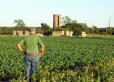 Farmer checks the soybeans Royalty Free Stock Images