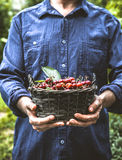 Farmer with cherries Royalty Free Stock Photo