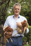 Farmer with chicken. Hobby-farmer with two brown chickens Stock Images