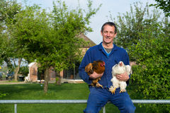 Farmer with chickens. Farmer outdoor is carrying chickens Royalty Free Stock Photography
