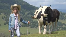 Farmer Child Pasturing Cows, Cowherd Girl with Cattle on Meadow in Mountains 4K.  royalty free stock images