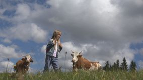 Farmer Child Pasturing Cows, Cowherd Kid with Cattle on Meadow Girl in Mountains.  stock image