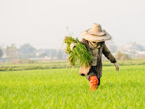 Farmer in china Stock Image