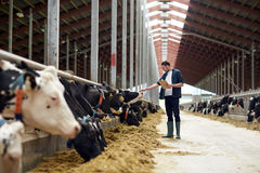 Farmer with clipboard and cows in cowshed on farm. Agriculture industry, farming, people and animal husbandry concept - happy young man or farmer with clipboard royalty free stock photo