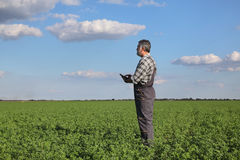 Farmer in clover  field Stock Images