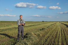 Farmer in clover  field after harvest Royalty Free Stock Photos