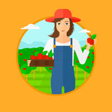 Farmer collecting apples. Royalty Free Stock Images
