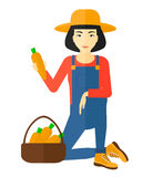Farmer collecting carrots. An asian farmer collecting carrots in basket vector flat design illustration isolated on white background Stock Image