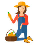 Farmer collecting carrots. A farmer collecting carrots in basket vector flat design illustration isolated on white background Stock Photography