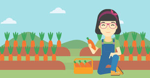 Farmer collecting carrots vector illustration. An asian female farmer collecting carrots in basket. Young farmer holding a carrot on the background of field Royalty Free Stock Photography