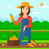 Farmer collecting carrots. A woman collecting carrots in basket on the background of field rows with green bushes vector flat design illustration. Square layout Royalty Free Stock Photos