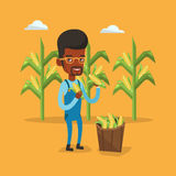 Farmer collecting corn vector illustration. Royalty Free Stock Photo