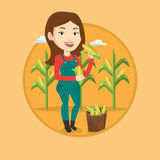 Farmer collecting corn vector illustration. Stock Photography