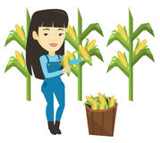 Farmer collecting corn vector illustration. Female asian farmer holding corn cob on the background of corn field. Farmer collecting corn. Happy farmer standing Royalty Free Stock Photography