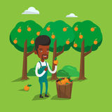 Farmer collecting oranges vector illustration. African-american farmer holding an orange on the background of orange trees. Farmer collecting oranges. Gardener Stock Images