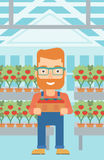 Farmer collecting tomatos. Royalty Free Stock Images