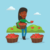 Farmer collecting tomatos vector illustration. African farmer holding box with tomatoes. Farmer standing near boxes with tomatoes and showing tomato on the Stock Photos