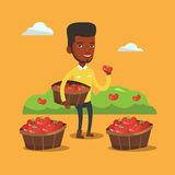 Farmer collecting tomatos vector illustration. African farmer holding box with tomatoes. Farmer standing near boxes with tomatoes and showing tomato on the Royalty Free Stock Photo