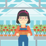 Farmer collecting tomatos vector illustration. Royalty Free Stock Photography