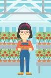Farmer collecting tomatos vector illustration. Stock Photo