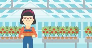 Farmer collecting tomatos vector illustration. Stock Image