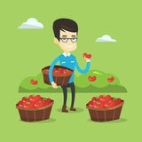 Farmer collecting tomatos vector illustration. Stock Photo