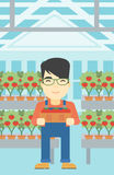 Farmer collecting tomatos vector illustration. Royalty Free Stock Images