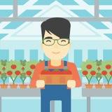 Farmer collecting tomatos vector illustration. Stock Photos